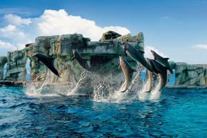 spettacolo dei delfini al parco Oltremare Riccione